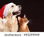 Christmas Cat And Dog ...