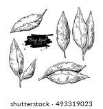 bay leaf vector hand drawn... | Shutterstock .eps vector #493319023