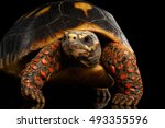 Stock photo close up of red footed tortoises chelonoidis carbonaria isolated black background with reflection 493355596