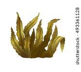 sea kelp  isolated illustration | Shutterstock . vector #493361128