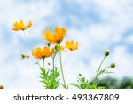 soft focus of colorful flower... | Shutterstock . vector #493367809