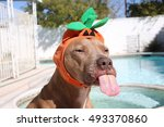 funny dog wearing cute... | Shutterstock . vector #493370860