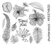 hibiscus  monstera ... | Shutterstock .eps vector #493374820