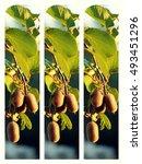 kiwi collage 3 | Shutterstock . vector #493451296