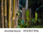 old bamboo fence. green hedge.... | Shutterstock . vector #493507396