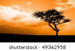 sunset in the African savannah, Masai mara, kenya - stock photo