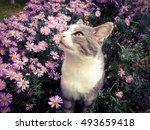 Beautiful Grey Cat Sitting In...