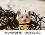 christmas cat   Shutterstock . vector #493666780