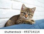 Cute Little Kitten Lying On...