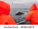 whale watching in husavik ... | Shutterstock . vector #493813819