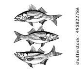 smallmouth bass hand drawn... | Shutterstock .eps vector #493822786