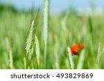 red poppies  | Shutterstock . vector #493829869