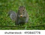 Cute Little Chipmunk Eating...