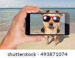 dog with sunglasses sit on the... | Shutterstock . vector #493871074