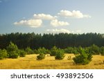 summer field and forest on... | Shutterstock . vector #493892506
