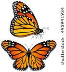 vector illustration of monarch...