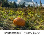 Pumpkin Patch Farm Series   Bi...