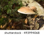 Small photo of Tinder conk Fomes fomentarius on a tree trunk