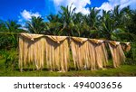 abaca fiber  known as manila... | Shutterstock . vector #494003656
