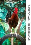 Rooster Perched On A Tire In...