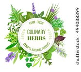 culinary herbs big set with... | Shutterstock .eps vector #494038399