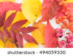 colorful background of fallen... | Shutterstock . vector #494059330