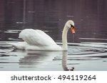 Swan Portrait. Closeup Side...