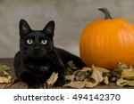 Black Cat As A Symbol Of...