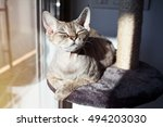 Stock photo cat loves to spending time sitting on scratching post with lounge space multi platform cat 494203030