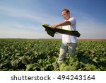 Man holds fixed wings drone while standing in a sugar beet field, prepares for drone launch and aerial imaging of crops