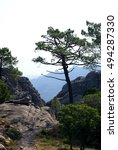 Small photo of En route on the hiking trail to popular cascade Piscia di Gallo - Rocks, pine trees and distance view onto the silhouettes of mountains, Bavella Massif, Alta Rocca, Corsica, France