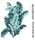 hand painted watercolor... | Shutterstock . vector #494380198