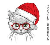 Cute Kitten In A Christmas Hat...