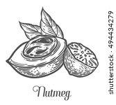 Nutmeg Nut Seed Vector....