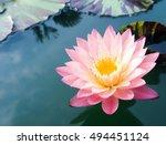 beautiful lotus flower | Shutterstock . vector #494451124