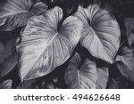 low key dark lighting nature... | Shutterstock . vector #494626648