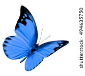 beautiful flying blue butterfly ... | Shutterstock . vector #494635750