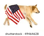 Large Yellow Labrador Retrieve...