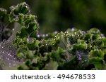 eko kale on black background | Shutterstock . vector #494678533