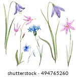 watercolor set of delicate... | Shutterstock . vector #494765260