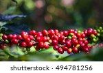 close up  arabica coffee berrys ...   Shutterstock . vector #494781256