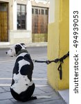 Stock photo a lone dog waits for its owner on the door of a bar 494939053