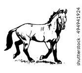 the przewalski's horse  an...   Shutterstock .eps vector #494941924