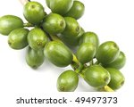 green coffee before it is ripe  ... | Shutterstock . vector #49497373