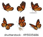 Beautiful Six Monarch...