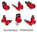 beautiful six red monarch... | Shutterstock . vector #495041044