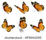 beautiful six monarch... | Shutterstock . vector #495041050