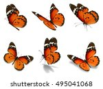 beautiful six orange monarch... | Shutterstock . vector #495041068