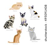 different breeds of cats ... | Shutterstock .eps vector #495091408
