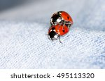 Love The World Of Ladybirds